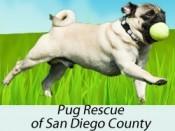 Pug Rescue San Diego