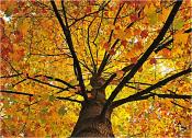 tree-rockaway-nj