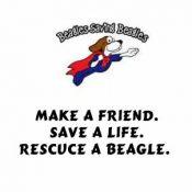Beagle rescue Virginia